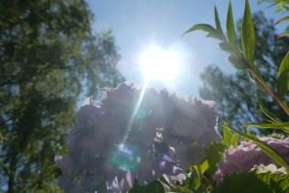 Solen ... ett värmande hjärta...