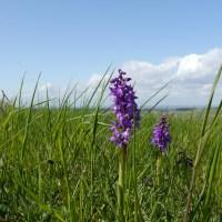 Orkidéer...