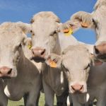 Maltrato animal en las granjas: la realidad que no queremos ver