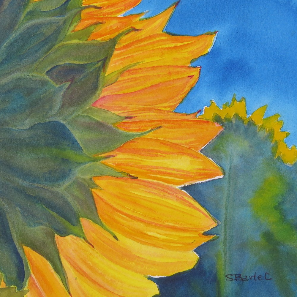 Sunflower in a Field - Image © Susan Bartel. All Rights Reserved. SOLD.