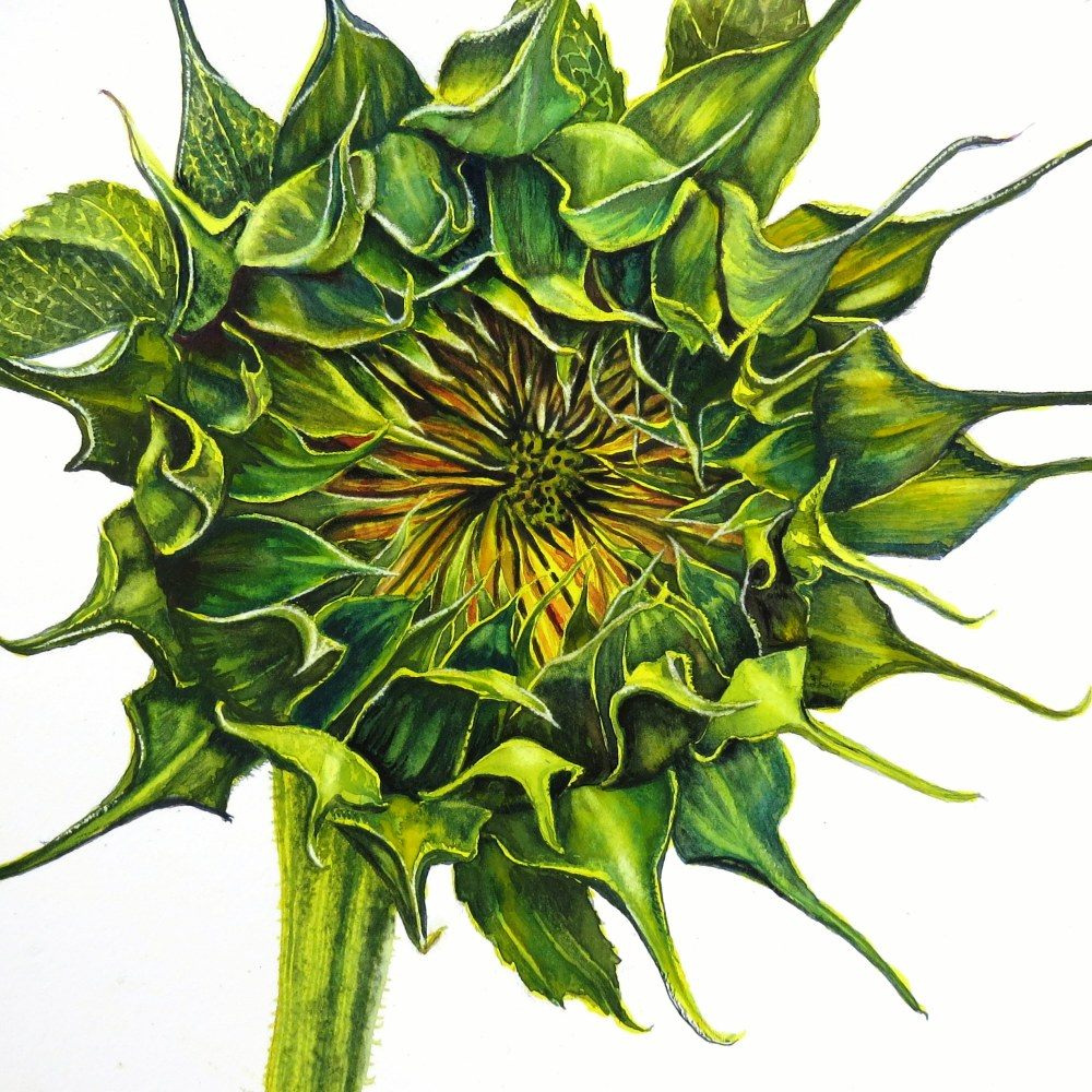 About to Burst – Image © Susan Bartel. All Rights Reserved.