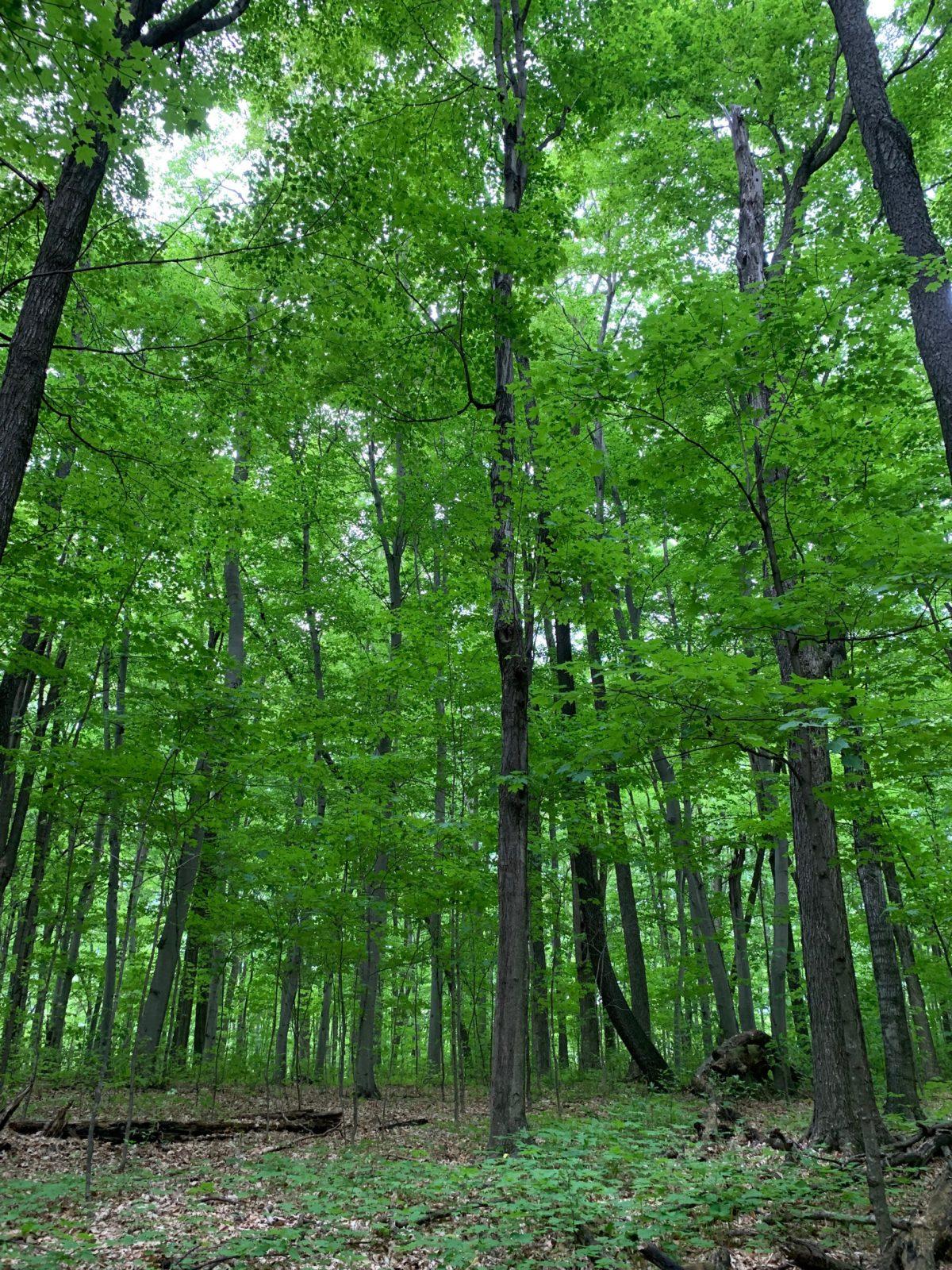 dense trees in park