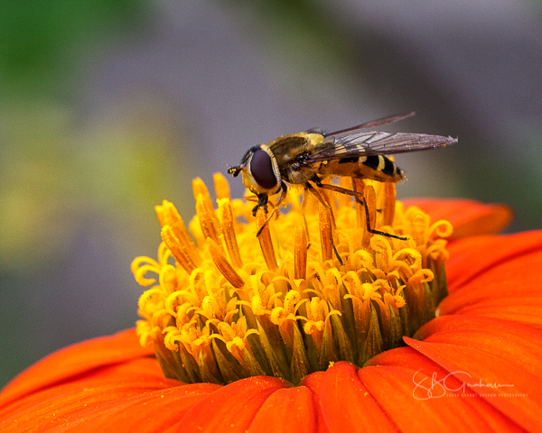 Hover Fly Update