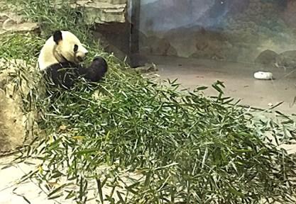 Tian Tian (born 8/27/97)