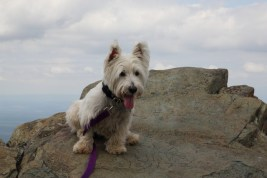 Humpback Rocks and Turk Mountain 4