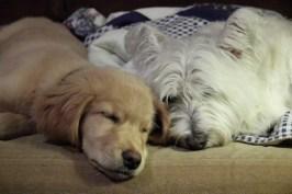 Scottie and Leo 3