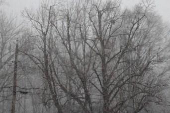 Snowy February Weekend 4
