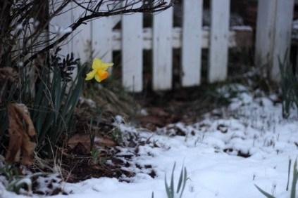 Snowy February Weekend 6