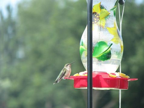 2430 Watch humming birds from your deck
