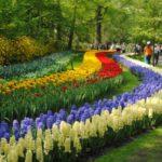 Tulip-Festival-Holland-MI-1