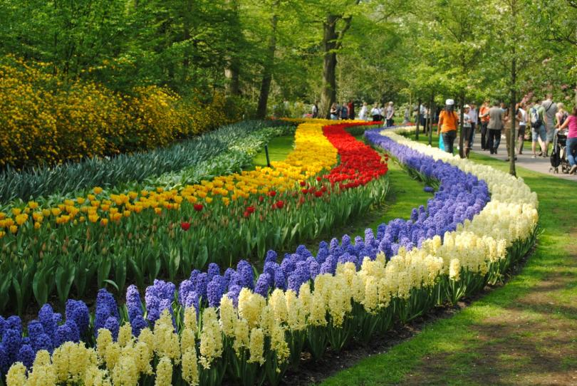 The History Of The Holland MI Tulip Time Compagner - Holland tulip festival