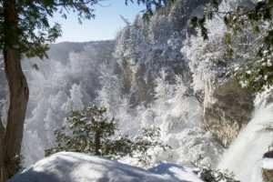 Icy Trees of Eugenia Falls