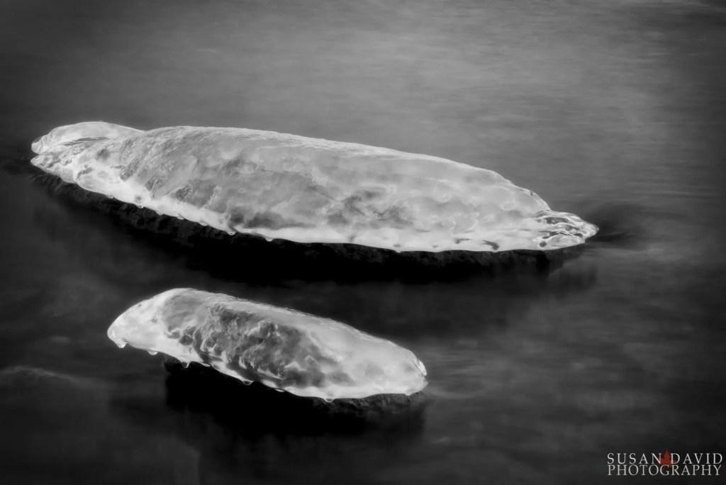 Ice Whales