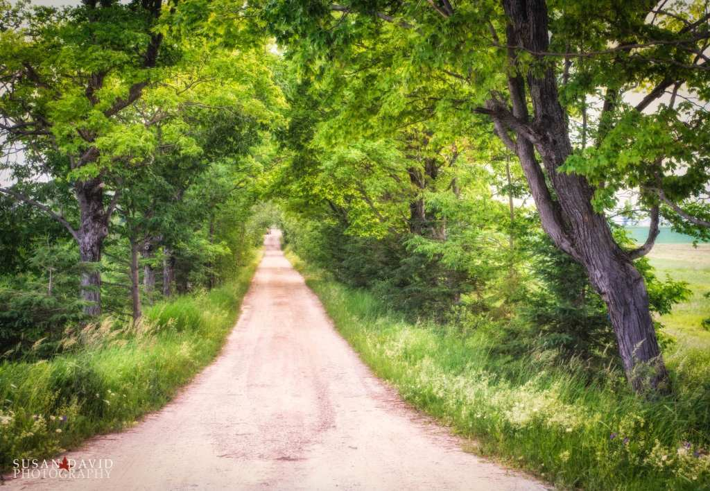 Walk Down My Path