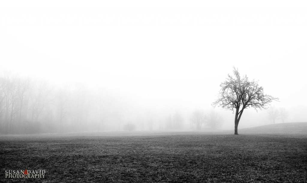 Tree-and-the-Fog.jpg