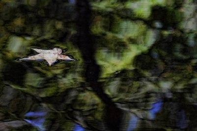 Leaf Cedar Creek