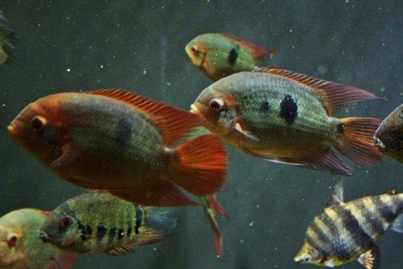 Montreal_BioDome_Fish