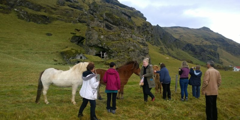 Our wonderful tour guide, Harpa, brought bread to coax the horses.