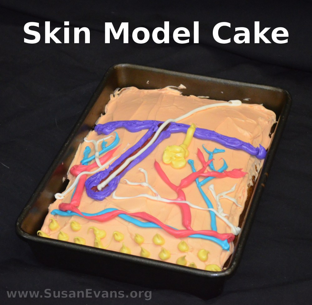 medium resolution of when studying the integumentary system in human anatomy why not create a skin model cake this is a great way to re enforce the diagram of the human skin