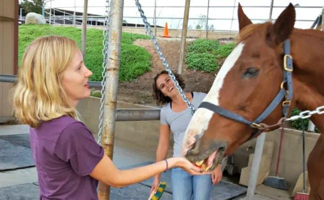 Saddle Seeks Horse and Me Jump Pretty