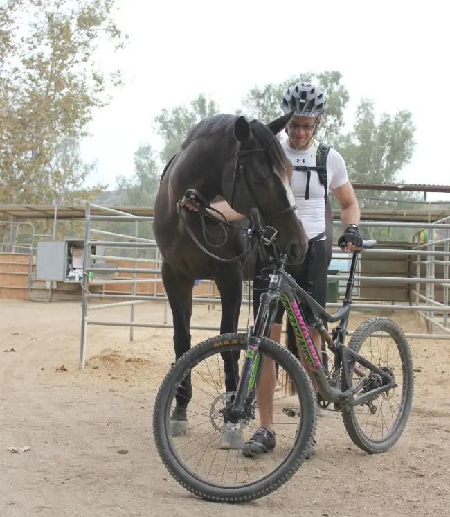 horse hubby