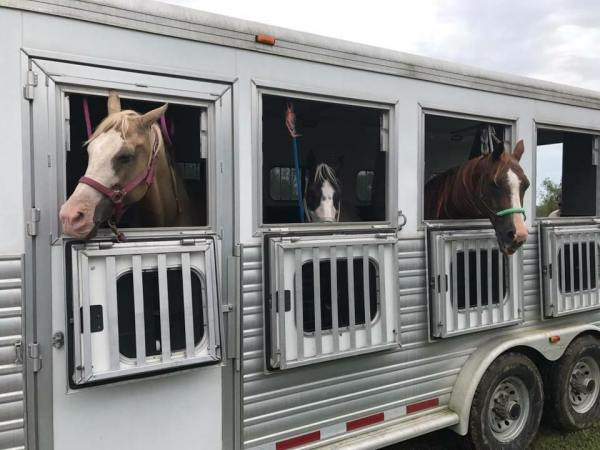 hurricane harvey horses saddle seeks horse