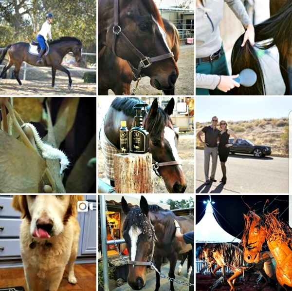 Horse photos on Instagram of a bay Thoroughbred