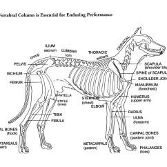 Dog Bone Diagram Sets And Venn Worksheets Helen King On Structure Evaluation Susan Garrett 39s