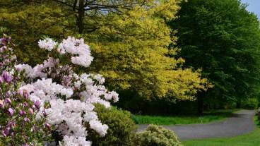 Susan Guy_Stoneywell_Garden_19.05.15 (1 w