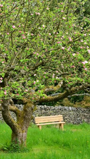 Susan Guy_Stoneywell_Garden_Orchard_08.05.15 (2 w