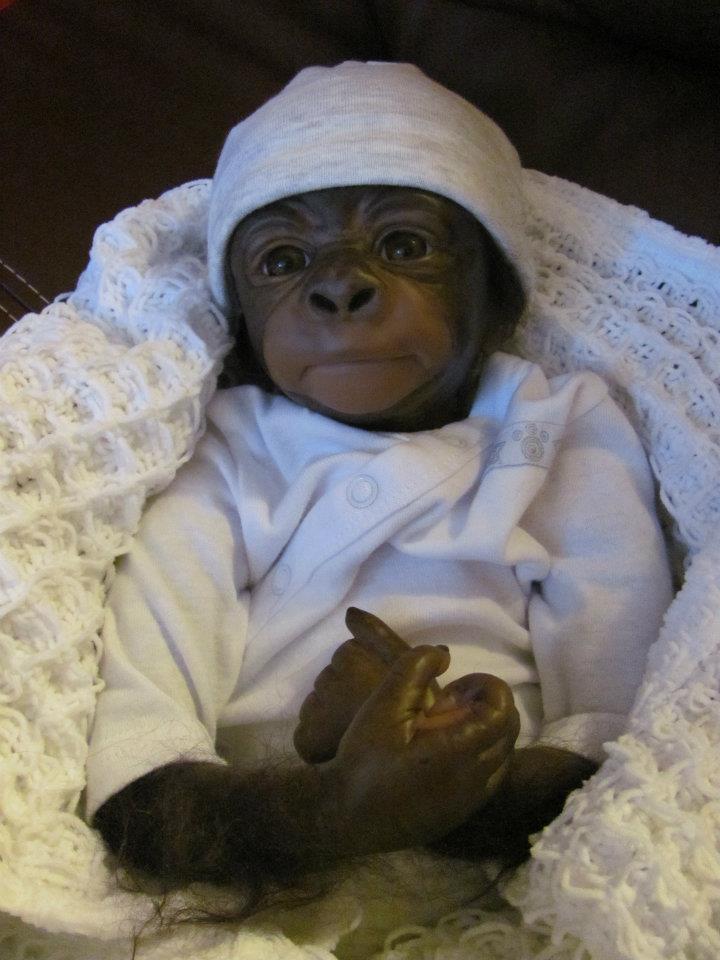 cute baby monkeys in