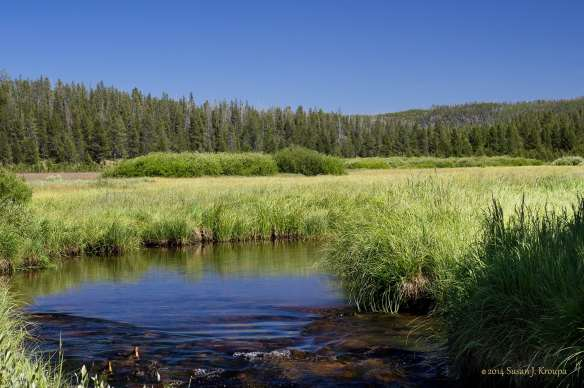 A meadow in Yellowstone, one of the most beautiful places on earth.