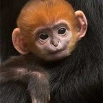 Monkey cuteness