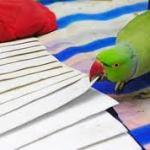 parrot reads tarot
