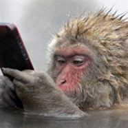 2019 Leo New Moon begins Monkey Month