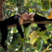 2020 Leo New Moon begins Monkey Month