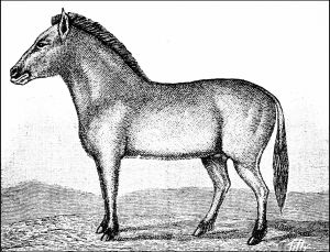 """""""Dzungarian wild horse"""" imagined in Popular Science Monthly, vol. 37, 1890. Wikimedia Commons."""