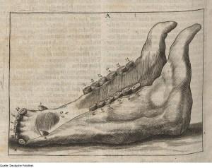 Illustration from Nutztierhaltung & Tiermedizin & Pferd by Georg Simon Winter, 1678 via Wikimedia Commons.