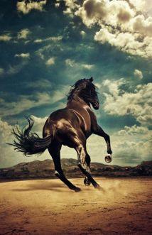 mens-horse