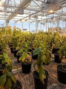 A greenhouse full of plants