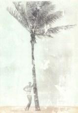 Palm Tree III_Serie_052015