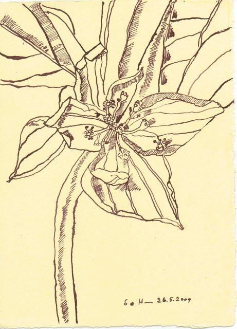 Blume - Zeichnung von Susanne Haun