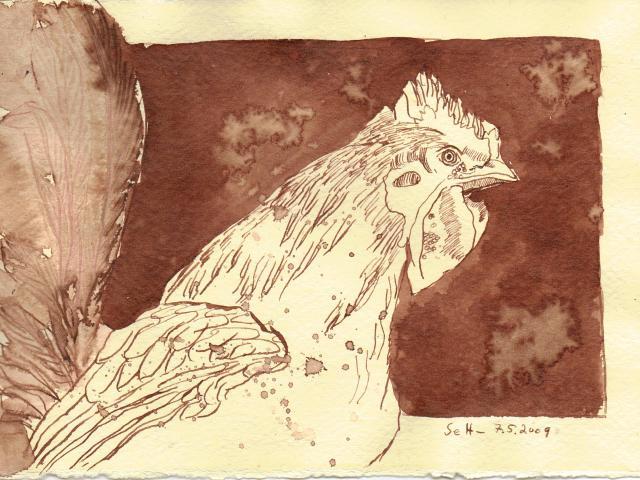 Kampfhahn - Zeichnung von Susanne Haun