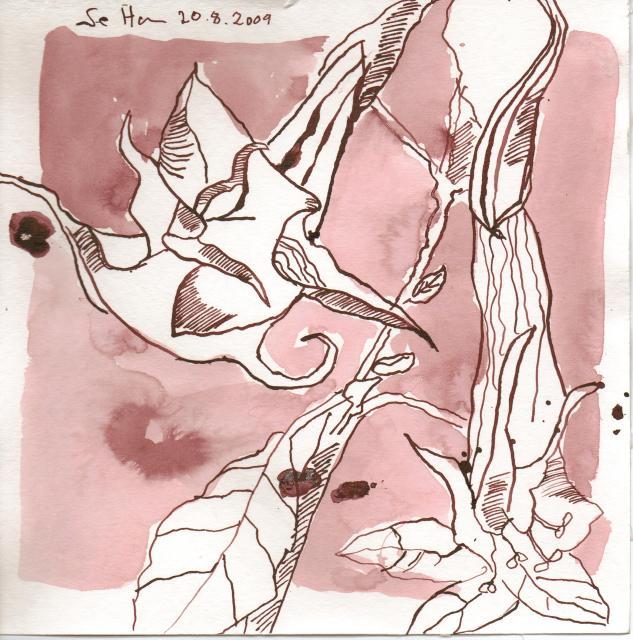 Trompetenblumen am Berliner Dom - Zeichnung von Susanne Haun