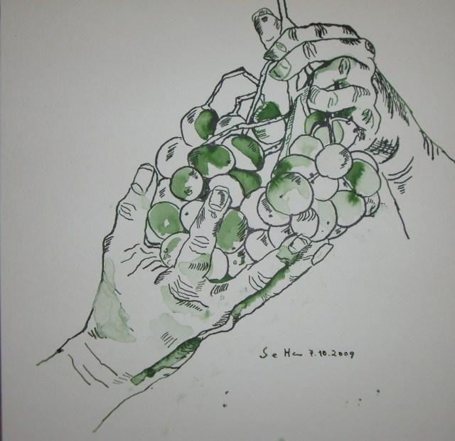 Weintraube - Zeichnung von Susanne Haun