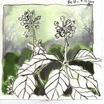 Strauch Blatt 1 - Zeichnung von Susanne Haun - 20 x 20 cm - Tusche auf Bütten