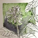 Strauch Blatt 2 - Zeichnung von Susanne Haun - 20 x 20 cm - Tusche auf Bütten