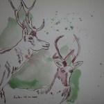 Hirsche - Zeichnung von Susanne Haun - 20 x 20 cm - Tusche auf Bütten