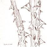 Rosenstöcke im Winter - Zeichnung von Susanne Haun - 20 x 20 cm - Tusche auf Bütten