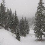 Blick aus dem Fenster - es schneit! - Foto von Susanne Haun